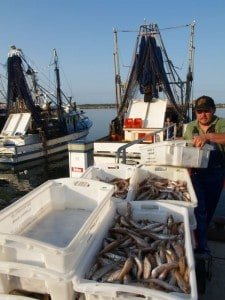 Fisherman packs catch
